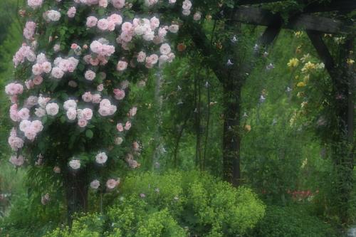 garden1113