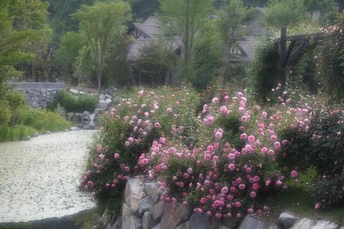 garden1114