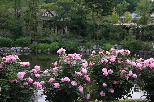 garden1117