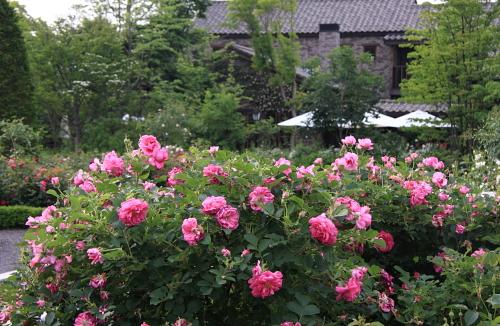 garden1119