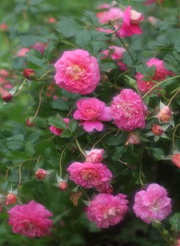 garden1128