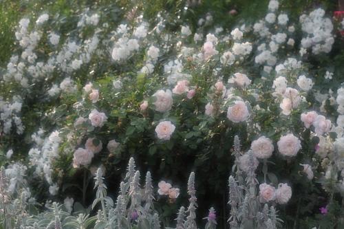 garden1129