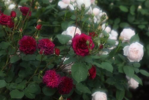 garden1130