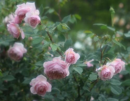 garden1133