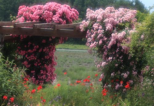 garden1135