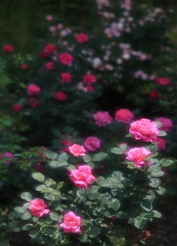 garden1136