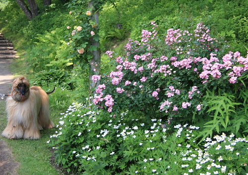 garden1139