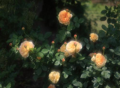 garden1141