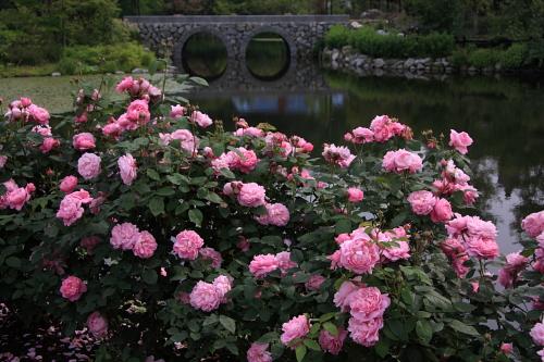 garden1144