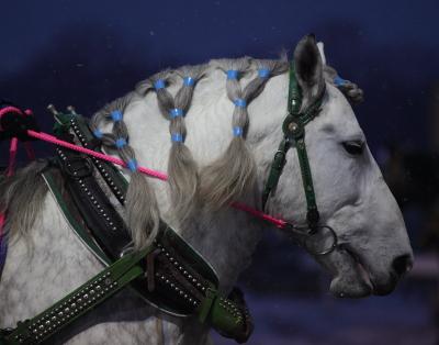 horse1003