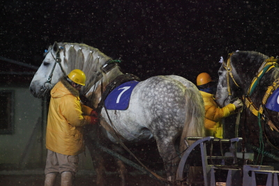 horse1005