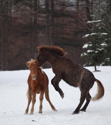 horse1006