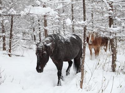 horse1008