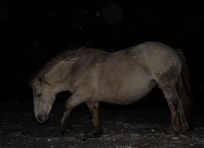horse1011