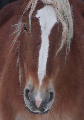 horse1012