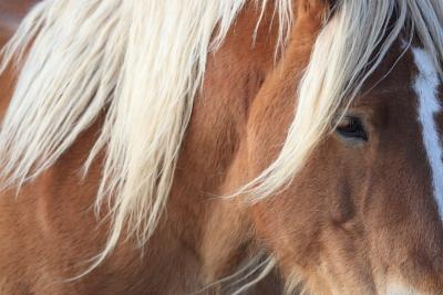 horse1016