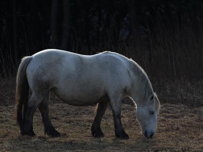 horse1017