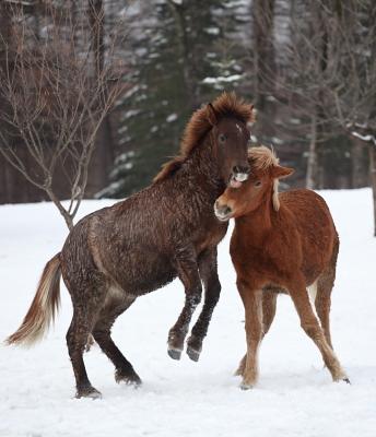 horse1018