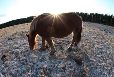 horse1019