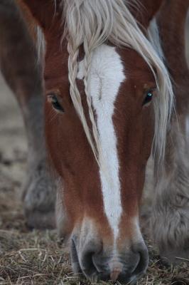 horse1023