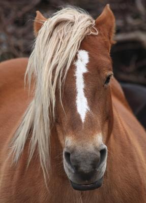horse1024