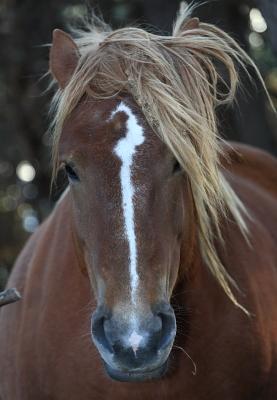 horse1025