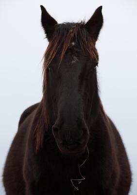 horse1027.