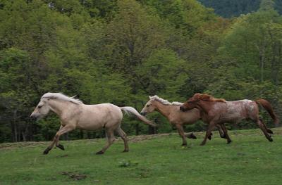 horse1028