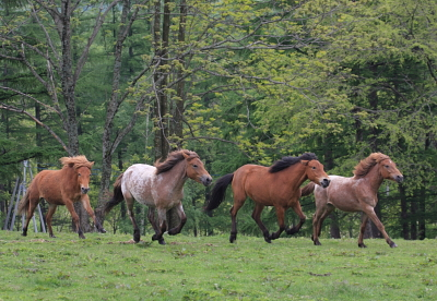 horse1029