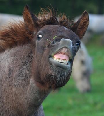 horse1030