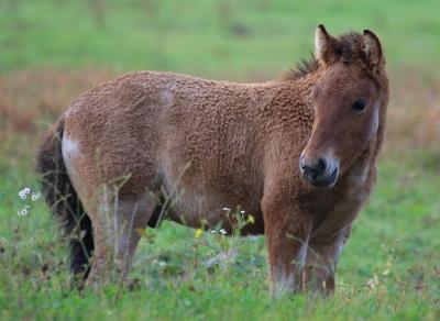 horse1031