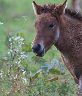 horse1032