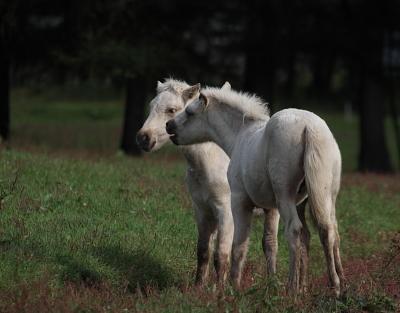 horse1034