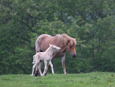 horse1040