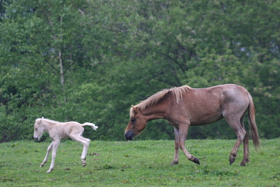 horse1041