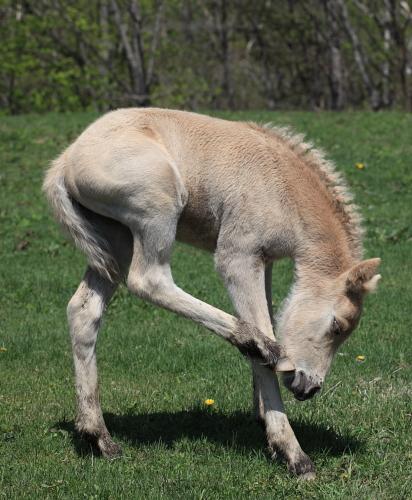 horse1100