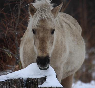 horse924