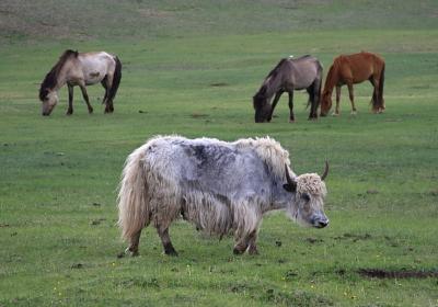 mongol1002