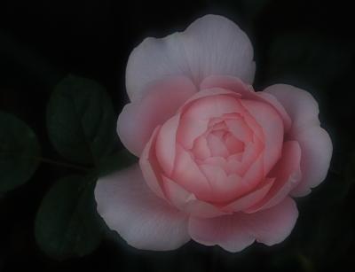 rose1040