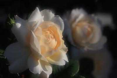 rose1042
