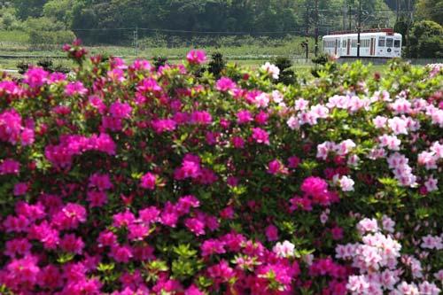 2011/5/5 和歌山電鐵貴志川線 大池遊園~西山口