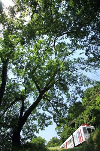 2011/5/14 和歌山電鐵貴志川線 山東~大池遊園