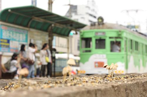2011/6/12 阪堺電軌阪堺線 妙国寺前