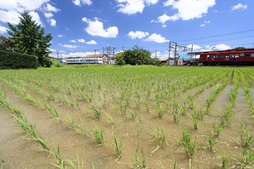 2011/6/25 和歌山電鐵貴志川線 伊太祈曽