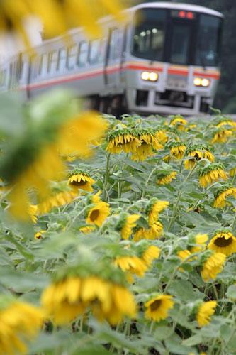 2011/7/24 JR姫新線 三日月~播磨徳久