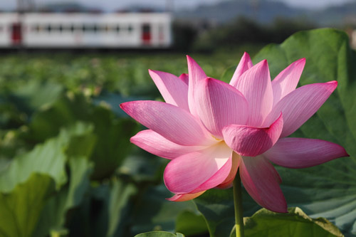 2011/7/30 和歌山電鐵貴志川線 甘露寺前