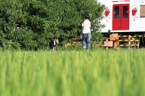 2011/8/14 和歌山電鐵貴志川線 大池遊園