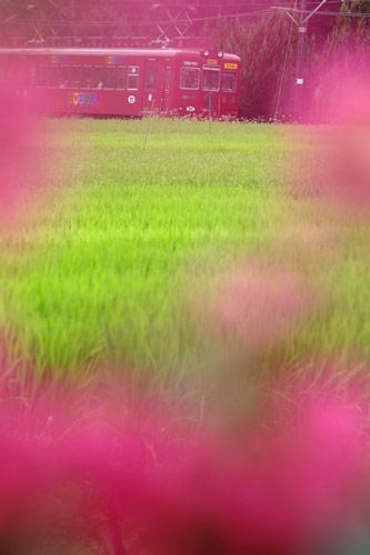 2011/8/20 和歌山電鐵貴志川線 大池遊園~西山口