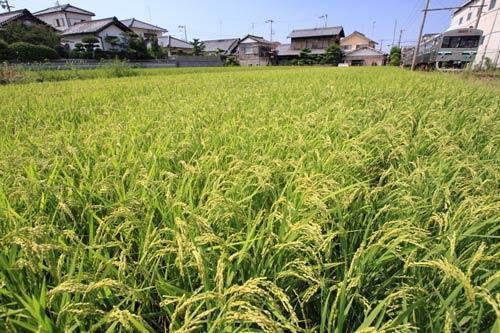 2011/8/28 水間鉄道 三ツ松~三ヶ山口
