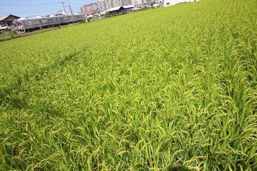 2011/9/11 水間鉄道 清児~名越